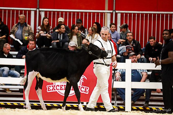 219RWF Holstein-1693