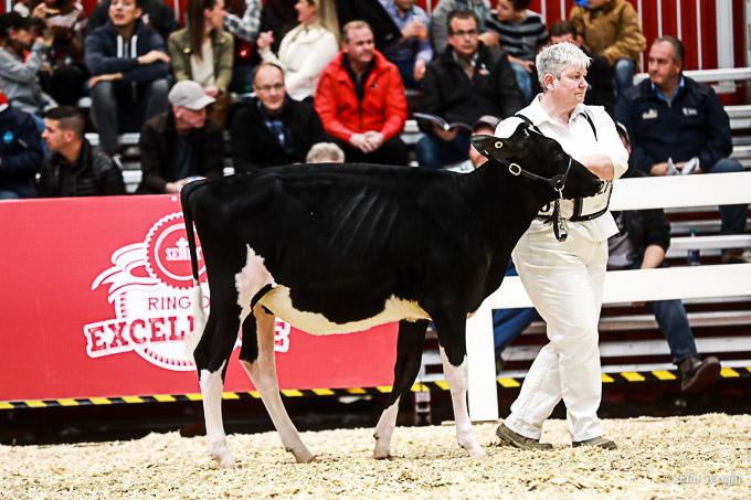 219RWF Holstein-1715