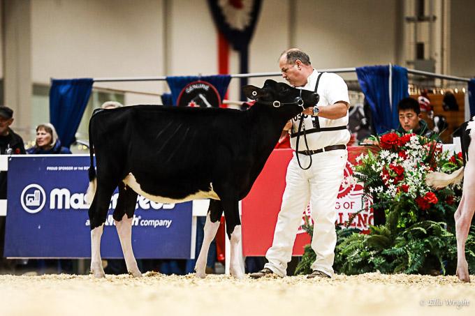 219RWF Holstein-1738