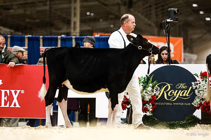 219RWF Holstein-1745