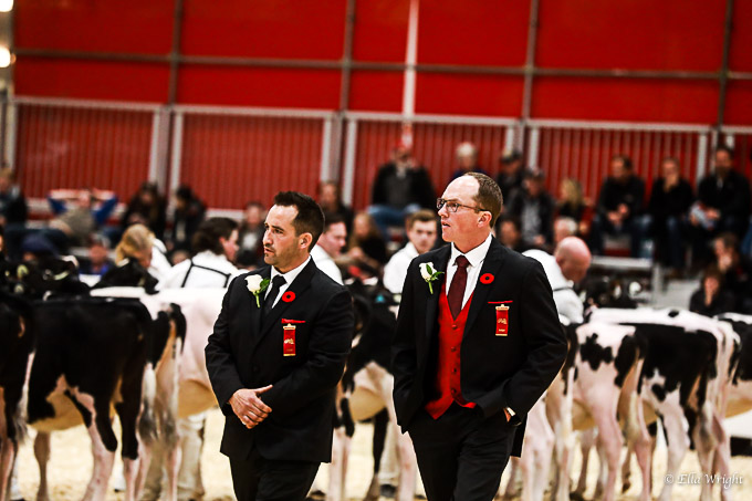 219RWF Holstein-1779