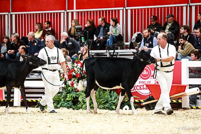 219RWF Holstein-1813