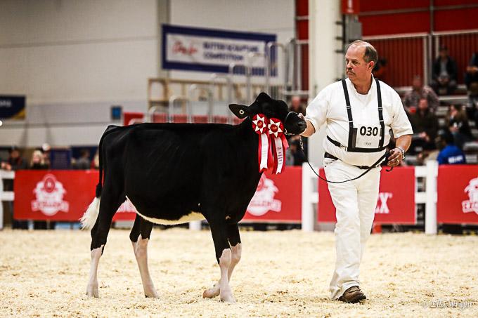 219RWF Holstein-1832