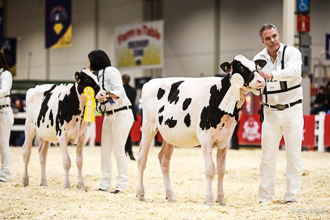 219RWF Holstein-1850