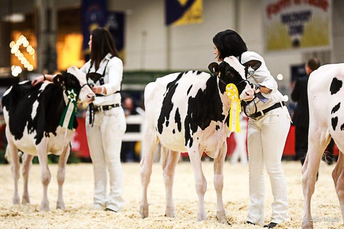219RWF Holstein-1851