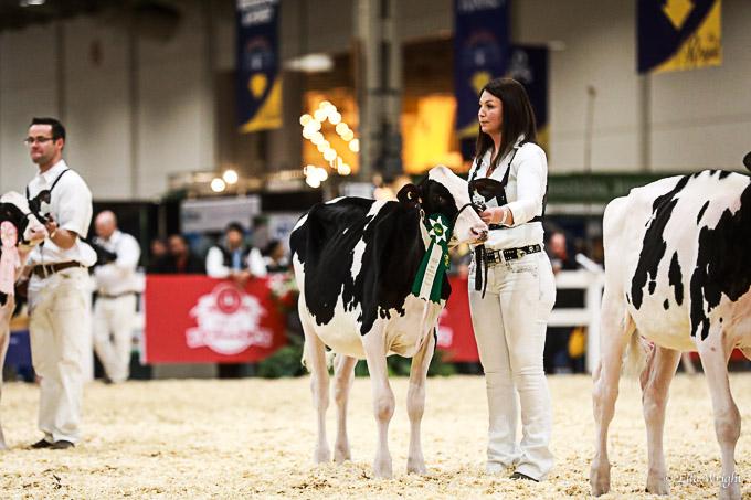 219RWF Holstein-1852