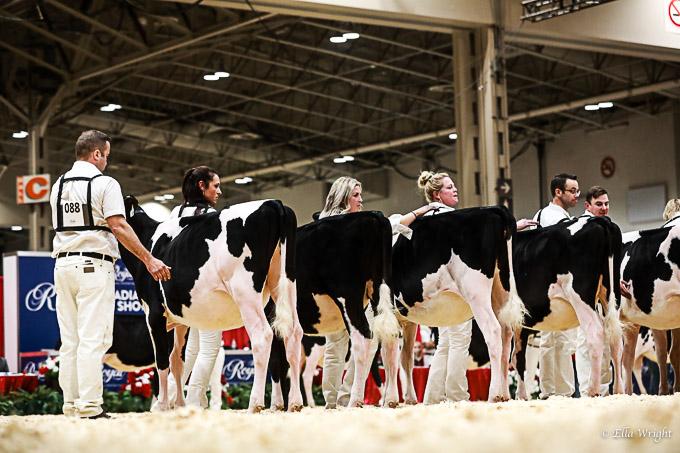 219RWF Holstein-1987