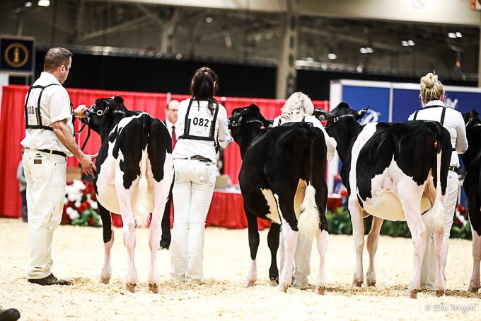 219RWF Holstein-1988