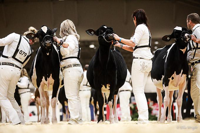 219RWF Holstein-1994