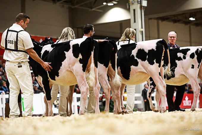 219RWF Holstein-2020