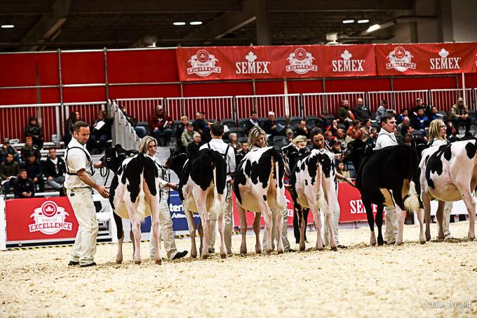 219RWF Holstein-2024