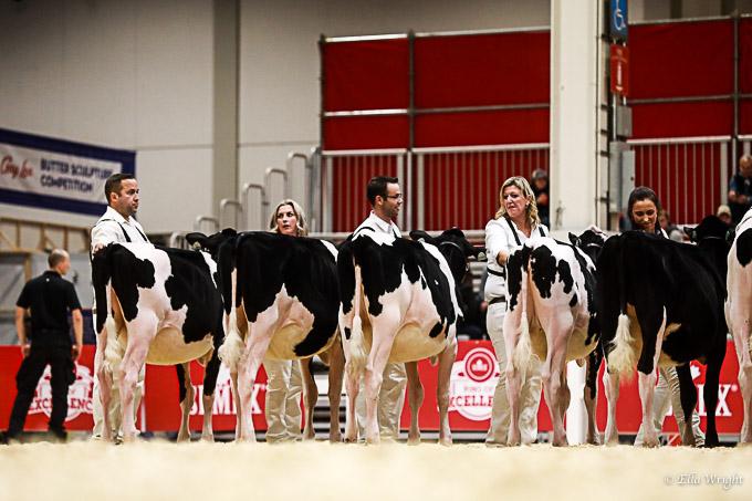 219RWF Holstein-2028