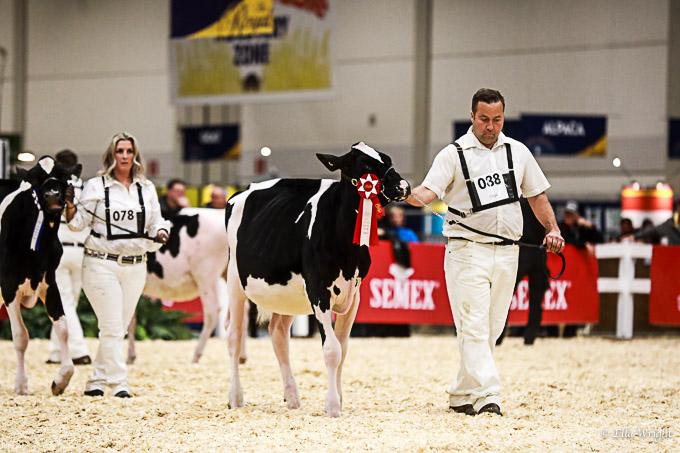 219RWF Holstein-2035