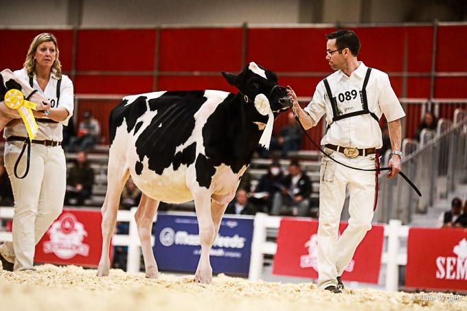 219RWF Holstein-2043