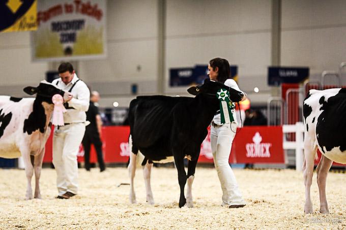 219RWF Holstein-2050