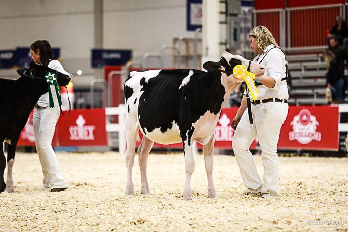 219RWF Holstein-2051