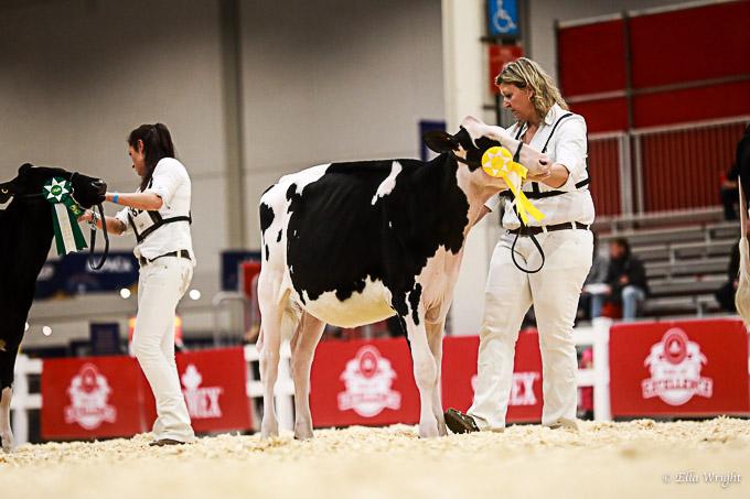 219RWF Holstein-2054