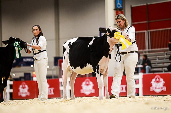 219RWF Holstein-2055