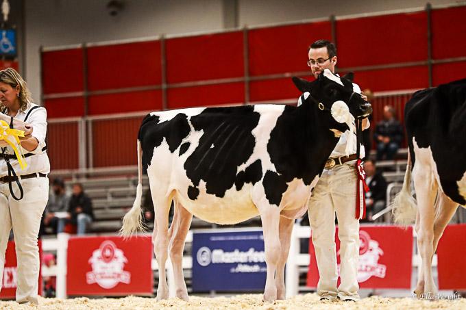 219RWF Holstein-2056