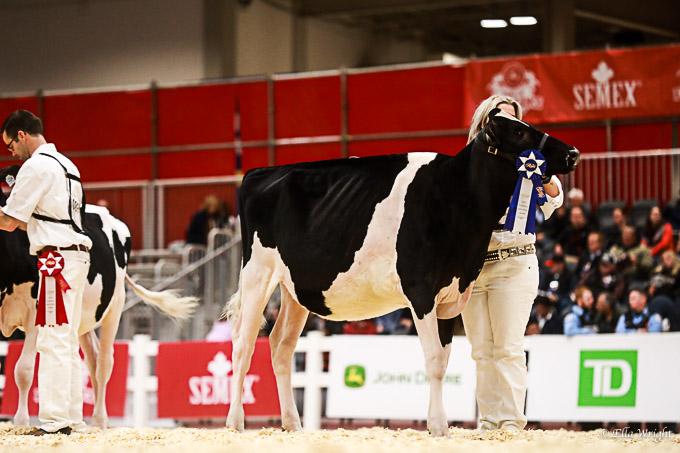 219RWF Holstein-2060