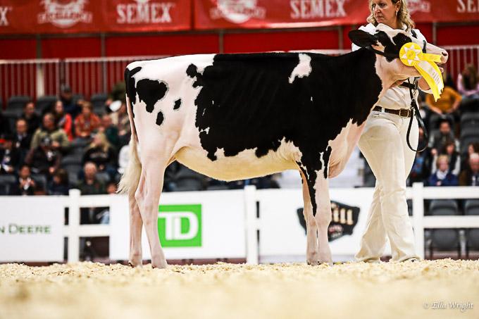 219RWF Holstein-2063