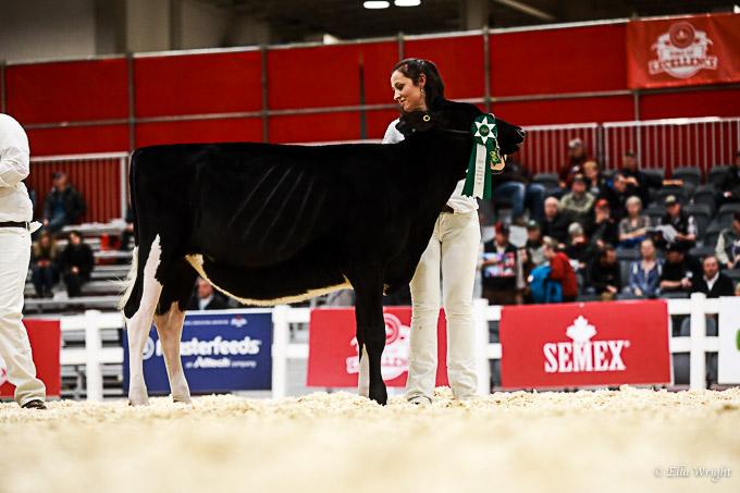 219RWF Holstein-2064