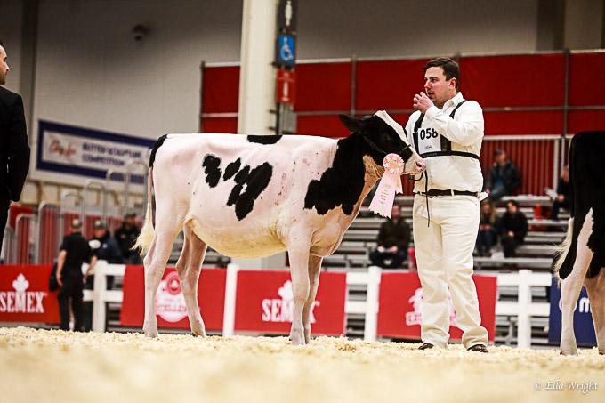 219RWF Holstein-2065