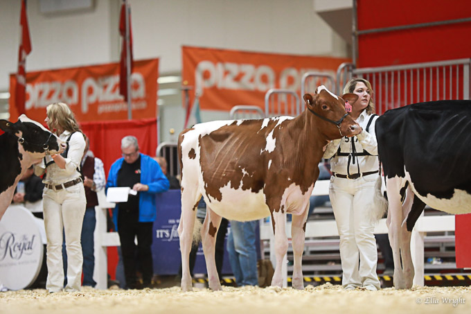 219RWF Holstein -2159