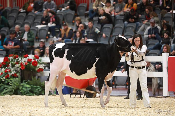 219RWF Holstein -2199