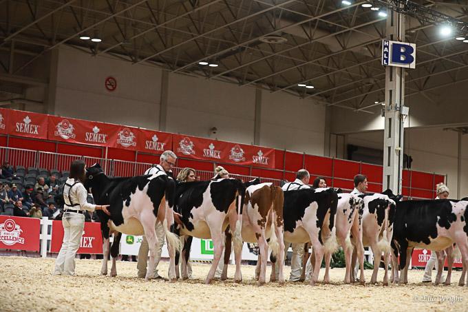 219RWF Holstein -2221