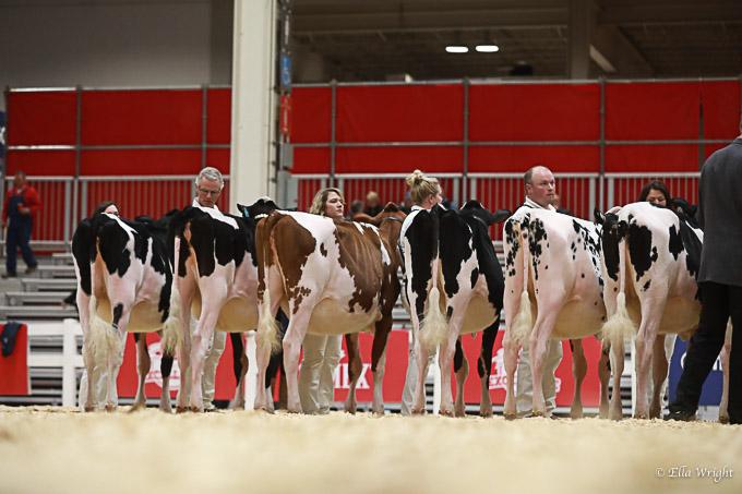 219RWF Holstein -2225