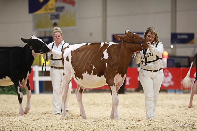 219RWF Holstein -2240