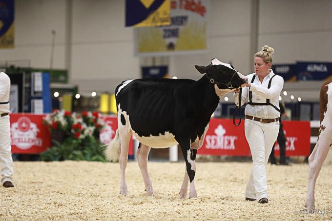 219RWF Holstein -2241