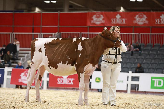219RWF Holstein -2250