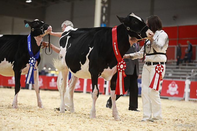219RWF Holstein -2260