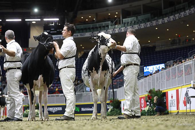 219RWF Holstein-2419