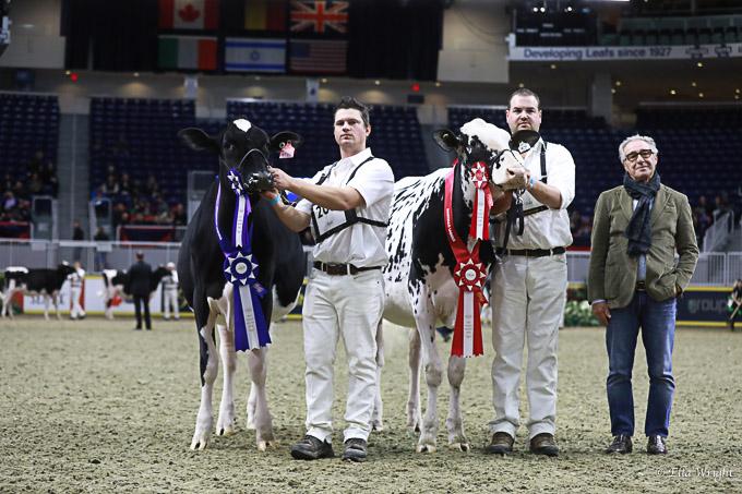 219RWF Holstein-2522