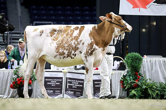 219RWF Holstein-2653