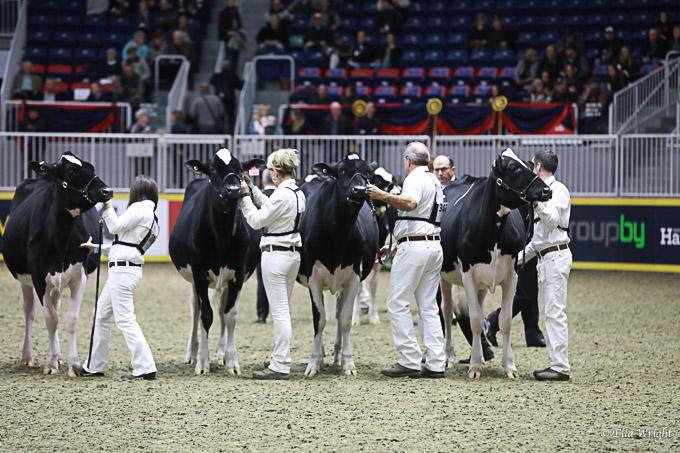 219RWF Holstein-2900