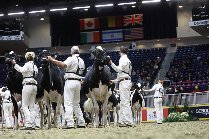 219RWF Holstein-2910