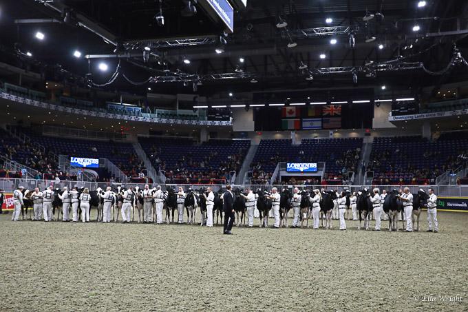 219RWF Holstein-2915