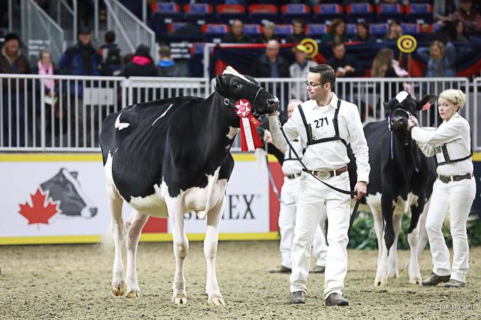 219RWF Holstein-2945