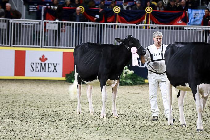 219RWF Holstein-3148