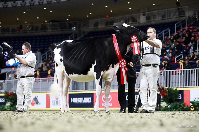 219RWF Holstein-3151