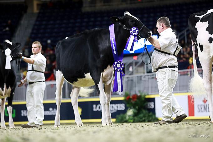 219RWF Holstein-3154