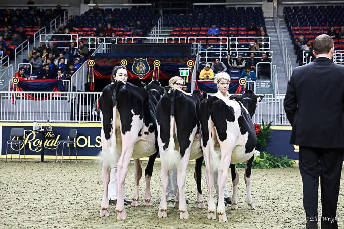 219RWF Holstein-3187
