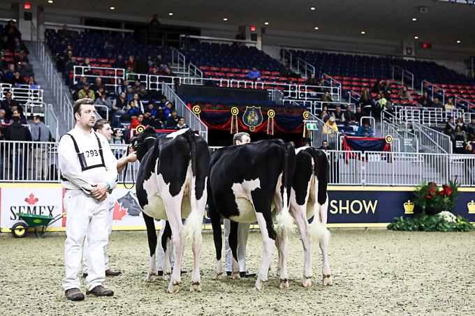 219RWF Holstein-3194