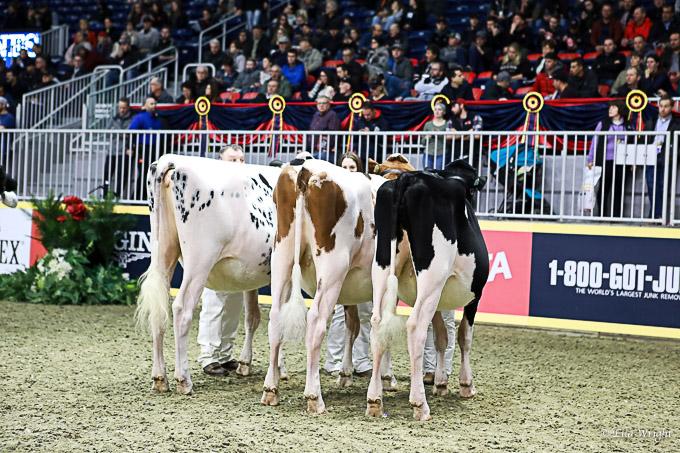 219RWF Holstein-3200