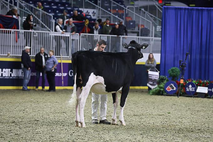219RWF Holstein-3285