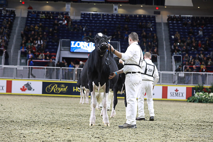 219RWF Holstein-3299